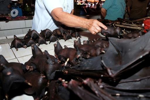 Murciélagos China