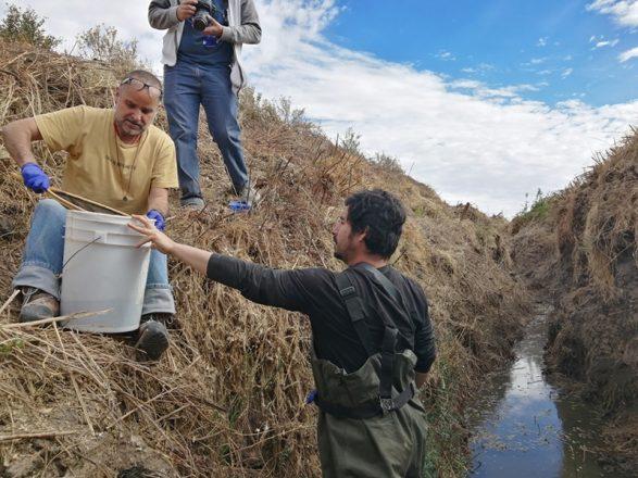 Imágenes del rescate de 62 ranitas del Loa realizado en junio de 2019. 14 de estos anfibios fueron trasladados al Zoológico Metropolitano para conservación en cautiverio.