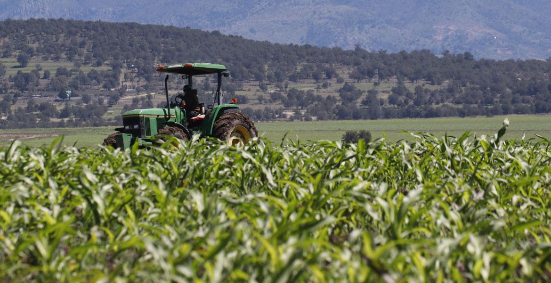 TRABAJADORES-AGRICOLAS-PAGO-HORAS-Y-DIAS-DE-DESCANSO