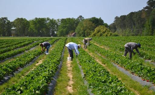 trabajadores agrícolasd