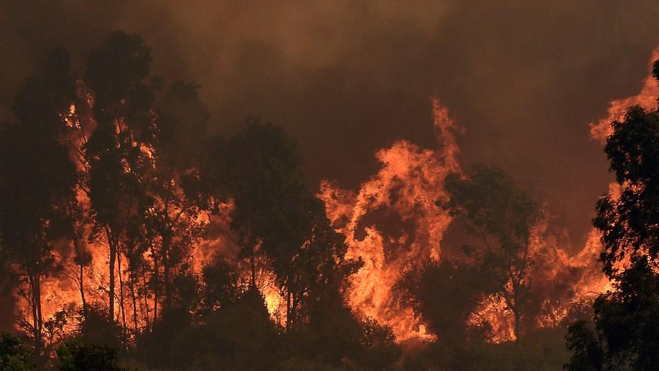 La ONEMI cifró en casi 3.000 las hectáreas afectadas por los dos incendios forestales que se desarrollan en la comuna de Quilpué. Foto: Agencia UNO.