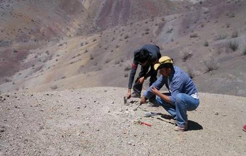 El suelo chileno es uno de los espacios privilegiados en el mundo para la exploración paleontológica.