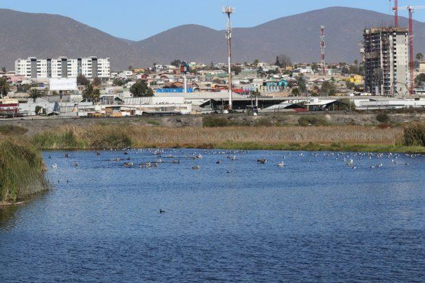 Humedal El Culebrón en la comuna de Coquimbo. Uno de los peligros que enfrentan estos sectores es el desarrollo explosivo de proyectos inmobiliarios en sus cercanías.